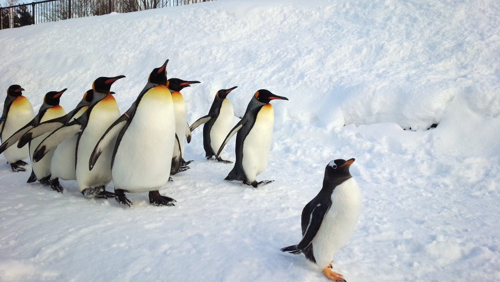 Asahiyama Zoo – Penguin Walk