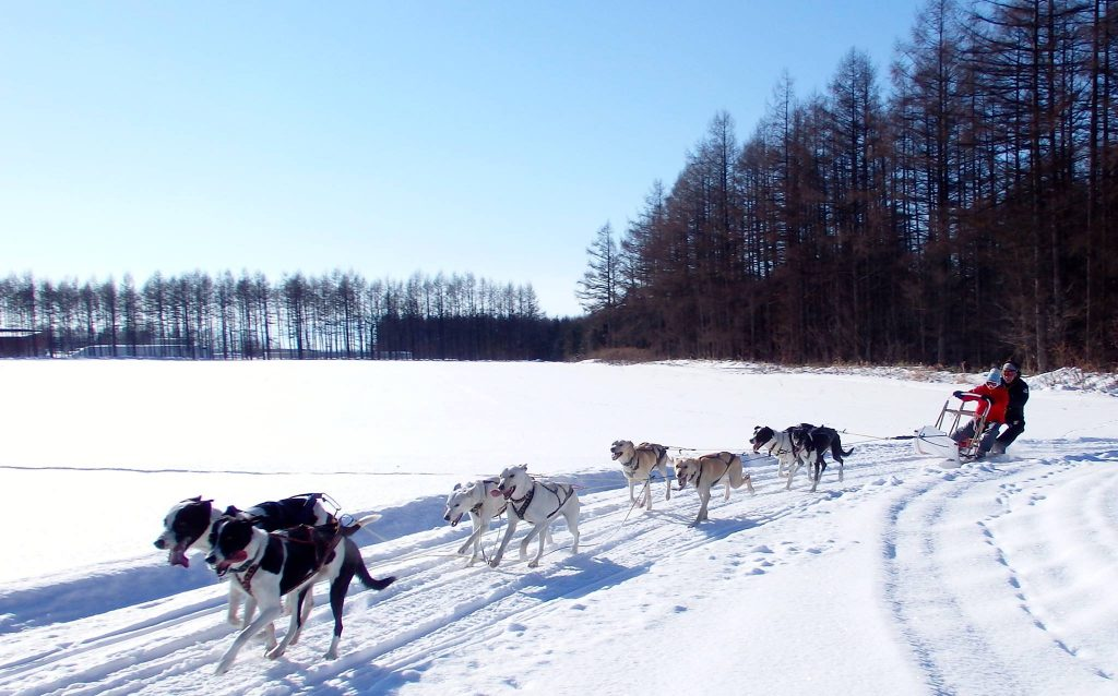 Mushing Works