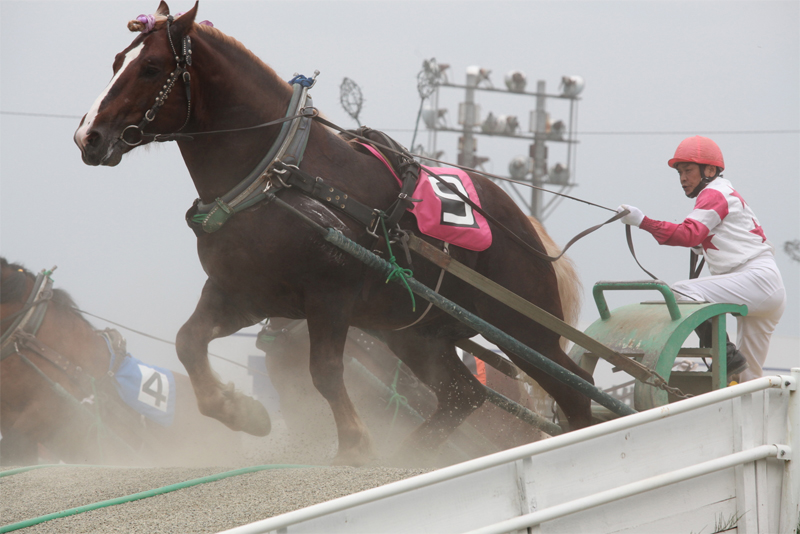 Obihiro RaceTracks